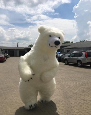 Драйвовий ведмідь Львів